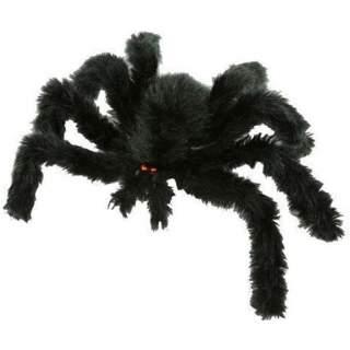 Araignée noire velue
